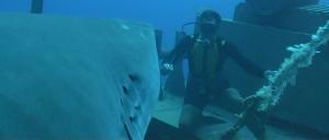 NSNA shark